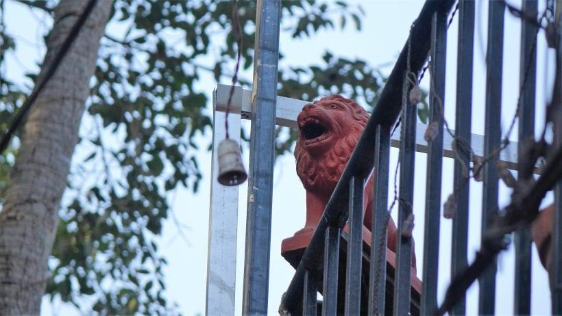 אריה במרפסת. גואה, הודו. צילום: ספיר פרץ זילברמן