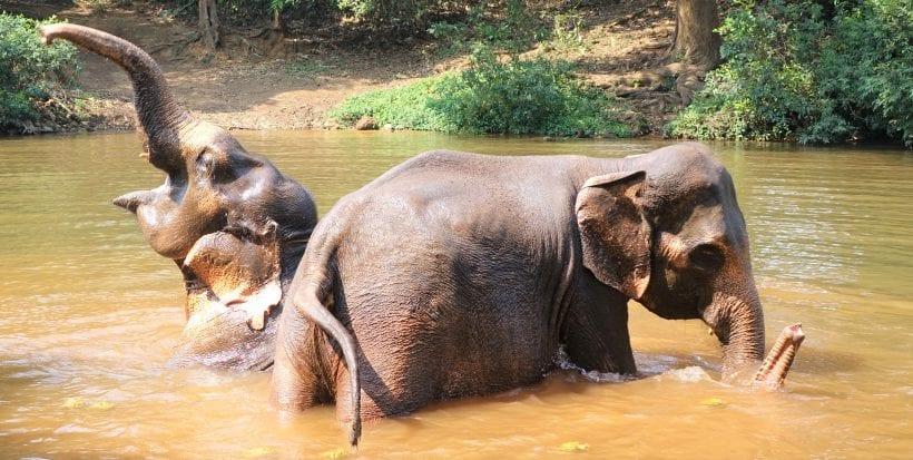 אם לבכם רחום, אל תרכבו על פילים בהודו ובכלל. צילום: ספיר פרץ זילברמן