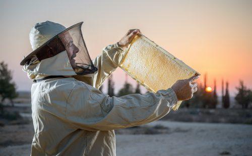 """יום הדבורה הבינלאומי: דבוראי ישראל מזמינים לחגוג בכפוף ל""""תו הסגול"""""""