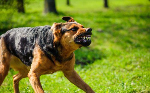 סכנת כלבת בצפון הארץ