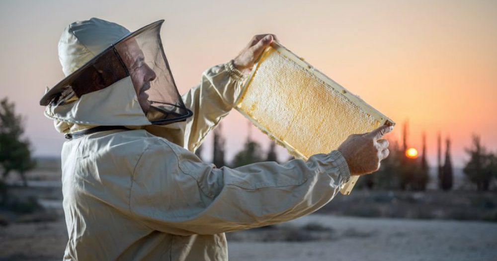 יום הדבורה הבינלאומי: דבוראי ישראל מזמינים לחגוג בכפוף ל