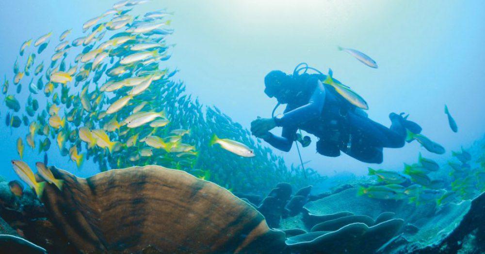 צלילה בפיליפינים. צילום: ארווין לים